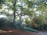 森の中の秋