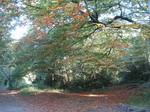 続 森の中の秋