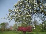 青い空といろんな色の桜たち