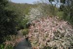 Hillでは桜も満開!